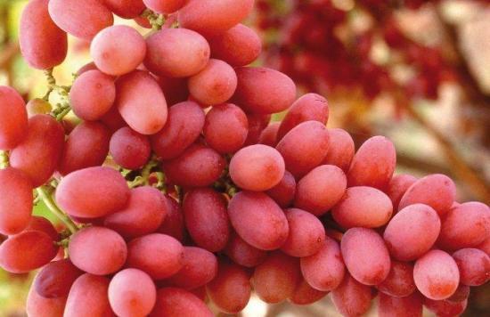 Venden un racimo de uvas por un precio récord de más de $10.000