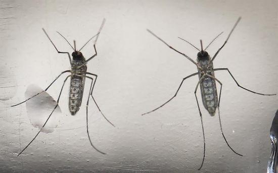 El virus del Zika se dispara en Puerto Rico