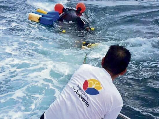 Rescatan a una ballena que estaba enredada