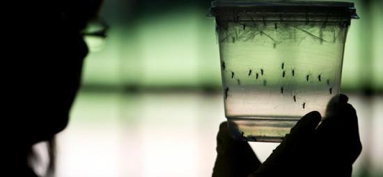 Manabí es la provincia con más casos de zika y dengue