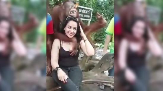 Un orangután se muestra 'cariñoso' con una turista durante su visita al zoológico