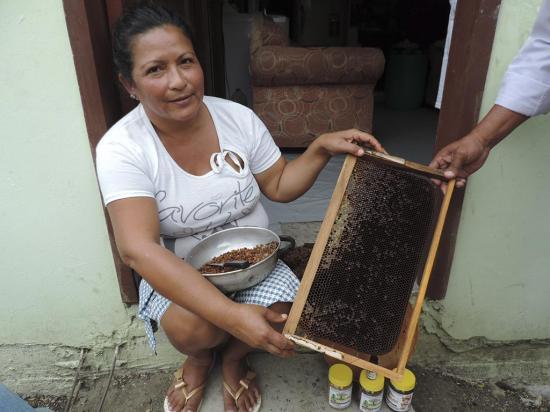 Las abejas migraron por el terremoto