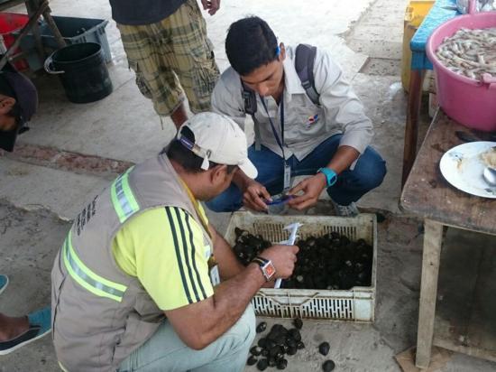 Ambiente decomisa conchas en el mercado