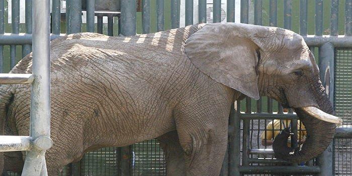 Un elefante mata por accidente a una niña de 7 años en un zoo marroquí
