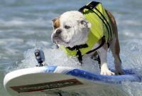 Los perros surfistas invaden una playa de EE.UU.