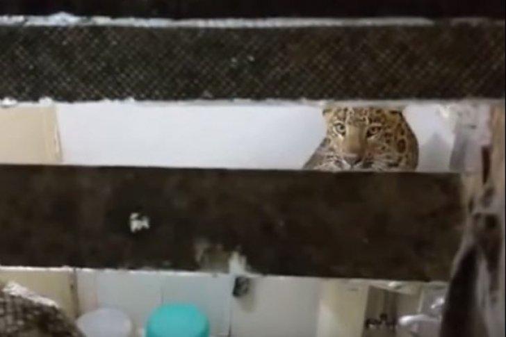 Un leopardo interrumpe a una pareja que se encontraba en plena luna de miel