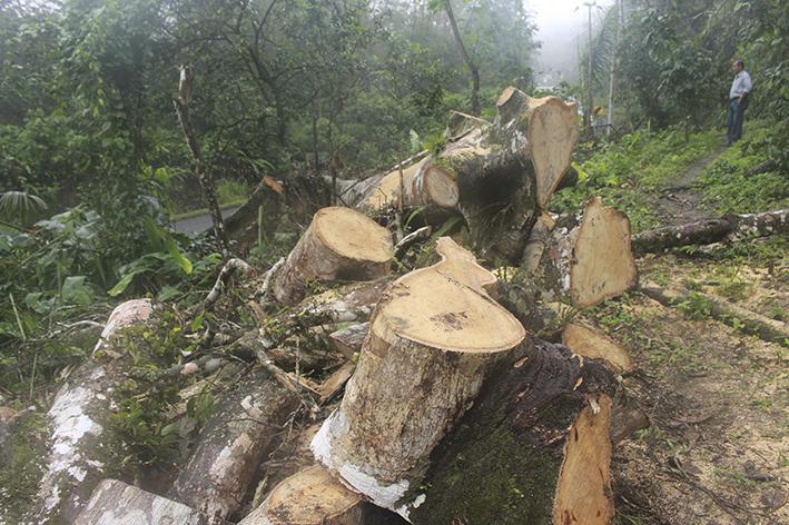Cortan árboles en bosque por trabajos