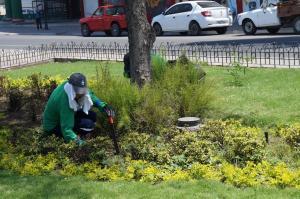 Plagas del verano arremeten contra las áreas verdes de la ciudad