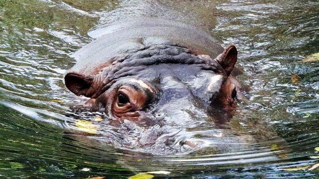 Animales de un antiguo zoológico campan libres en un municipio de Sao Paulo
