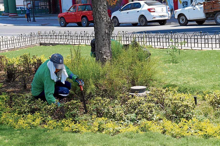 Erradican insectos y plagas de las plantas de parques y for Plantas ornamentales para parques