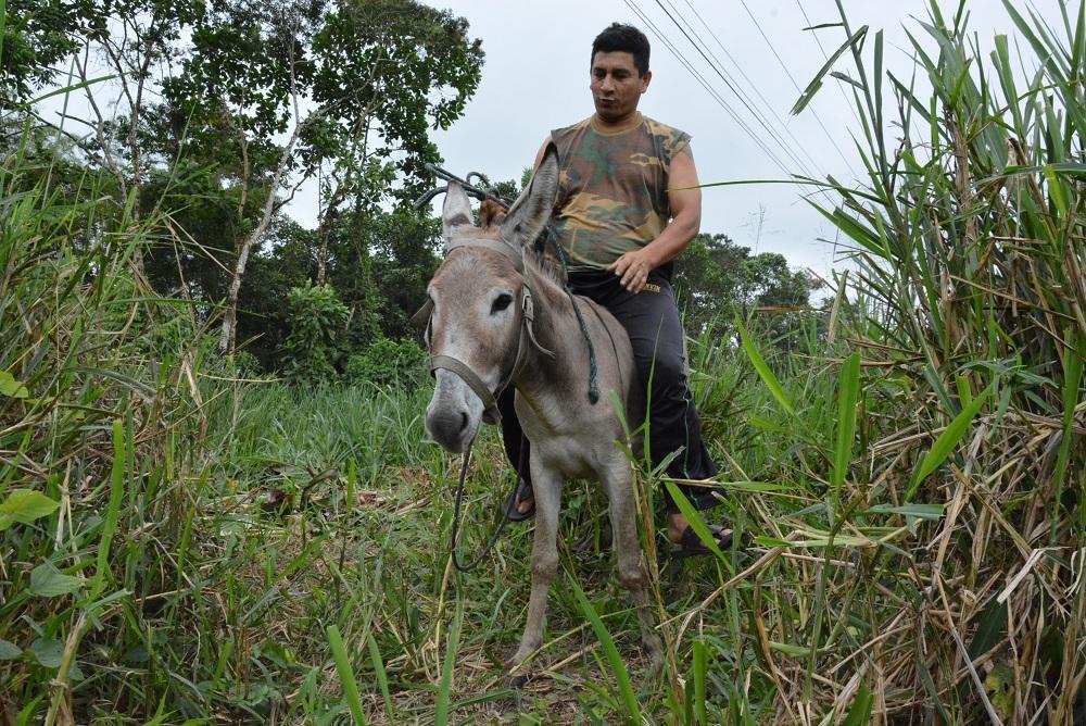 Los burros transitan