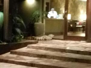 Un caimán yacaré aparece en un hotel de cinco estrellas y genera pánico