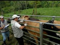 Los ganaderos  piden fecha para la vacunación