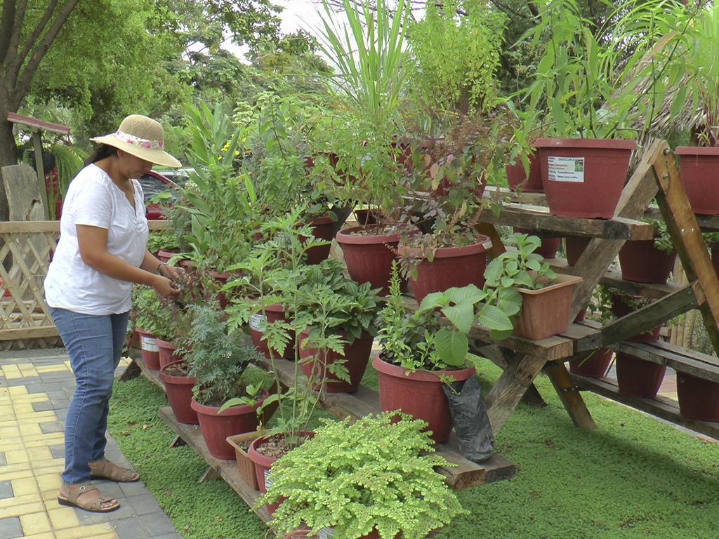 45 especies de plantas medicinales en un nuevo vivero en for Viveros de plantas en renca