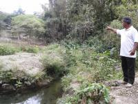 Proyecto reforestará dos riberas