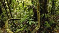 Una brasileña da a luz en medio de la selva amazónica después de perderse