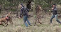 Hombre pelea con un canguro para salvar a su perro
