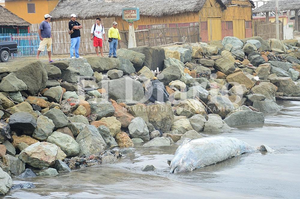 El cadáver de un delfín se vara en la playa de San Jacinto
