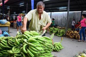 Alto precio del plátano sorprende y preocupa a los manabitas