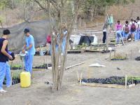 Reforestarán colinas con más de 9 mil plantas