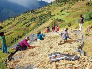Alimentos ancestrales del Ecuador