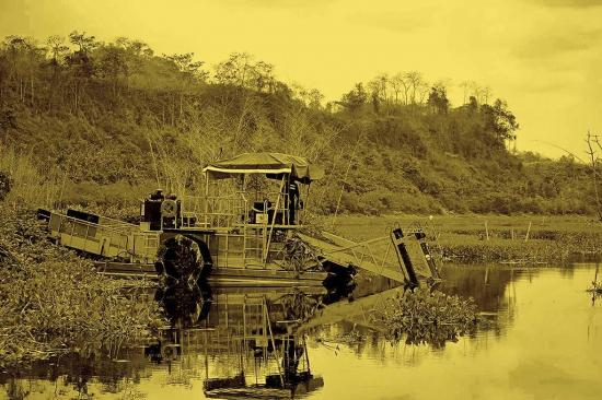 Limpian lechuguines en Río rande