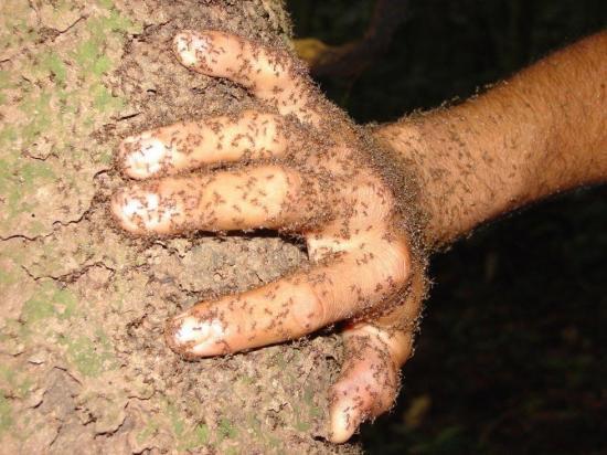 Mujer fue atada a un árbol plagado de hormigas y murió por las picaduras