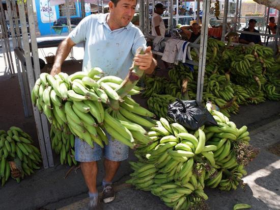El plátano escasea y  su precio  es elevado