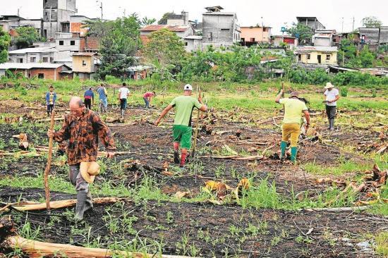La lluvia alegra a los agricultores de Los Ríos