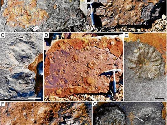 Científicos hallan fósiles inéditos