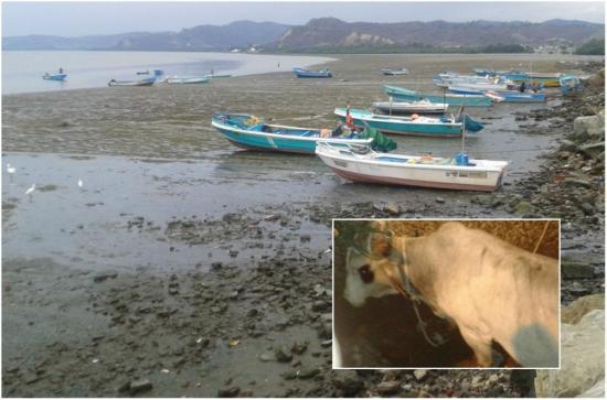 Un toro se escapa y es perseguido en el mar