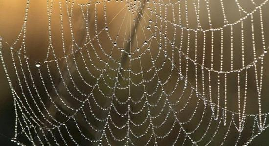 Crean una nueva seda de araña artificial, el material de las mil aplicaciones