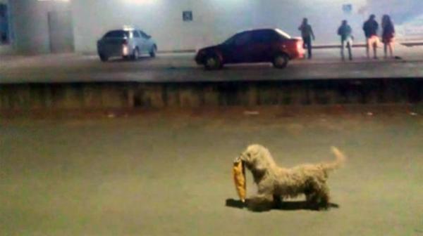 Conoce a 'Max', el perro 'saqueador' que cautivó a todo México
