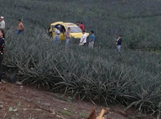 Taxi cayó a plantación de piñas