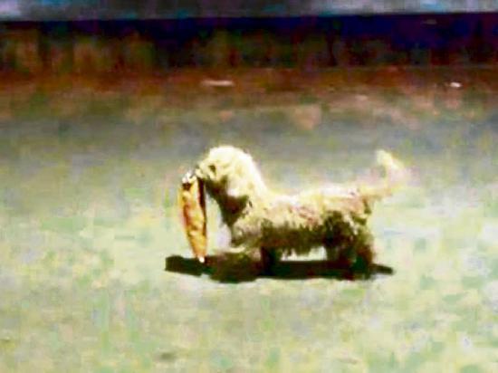 Can fue captado robando una bolsa de papas