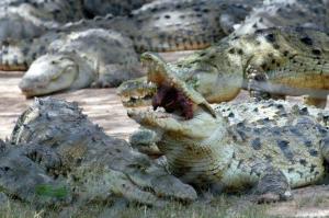 Un guía turístico muere atacado por cocodrilos en una reserva de Sudáfrica