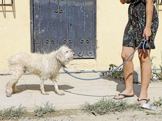 Envenenan  a los perros