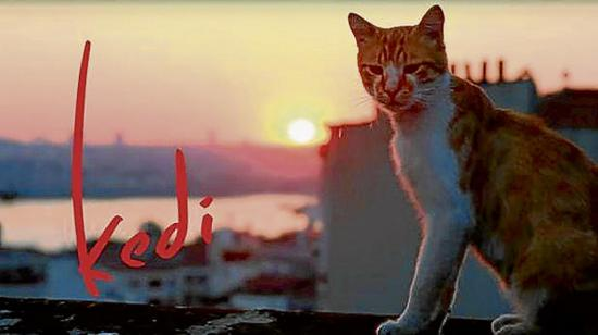 Un documental  sobre siete gatos