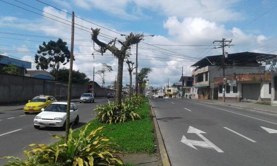 Controlan crecimiento de árboles