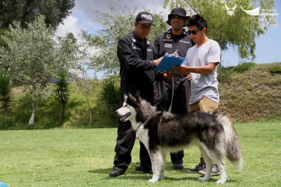 Proceso de adopción de canes para la Policía Nacional continúa hasta el 2 de febrero