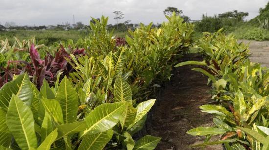 Impulsan programa de reforestación