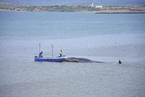 Una ballena varada