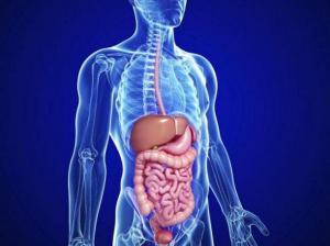 Anuncio de nuevo órgano en el cuerpo humano abre debate científico