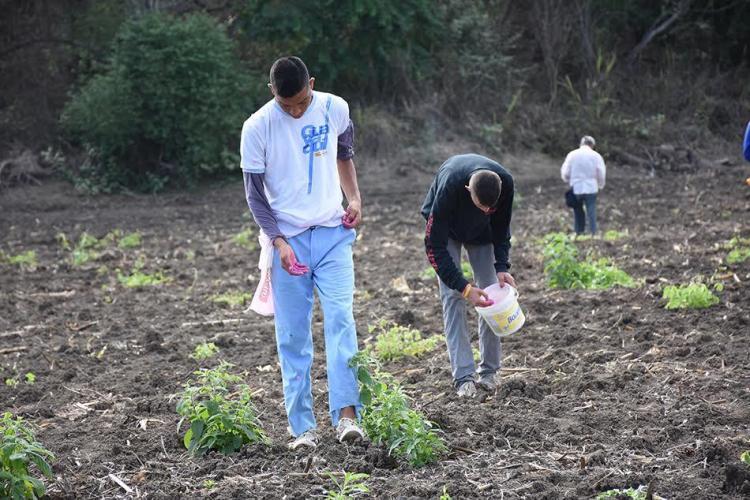 Agricultores comienzan los sombríos con las primeras lluvias en la vía Colón-Quimis