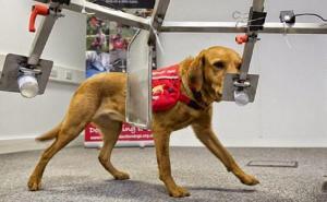 Perros ayudan en la detección prematura del cáncer entre bomberos de Texas