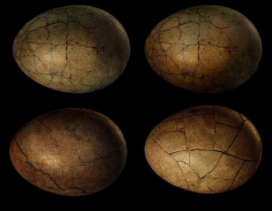 Hombre es detenido por robar huevos de dinosaurio fosilizados