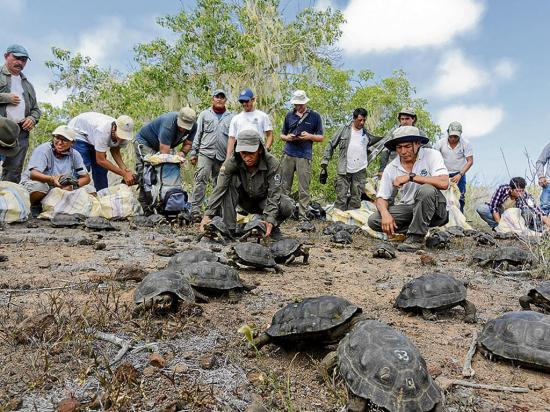 26 personas participan en la liberación de 190 tortugas gigantes