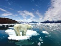 ¡Perdemos el Polo norte!
