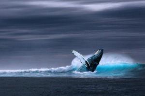 Muertes de 3 adolescentes estarían relacionadas con reto de 'la ballena azul'