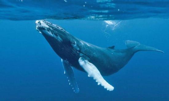 El juego macabro de 'La ballena azul'